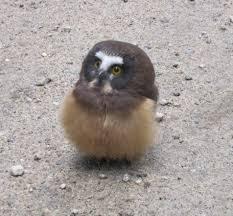 owler