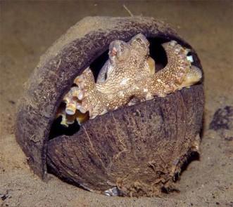 casper-octopus