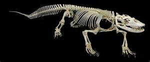 komodo-skeleton