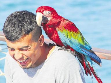 giggling man with large parrot perched on his shoulder