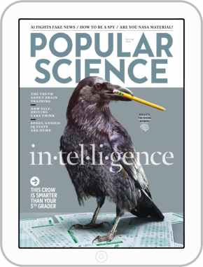 picture of a crow hoilding a pencil in its beak