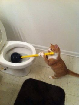cat holding a toilet plunger