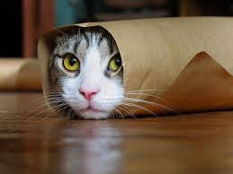 cat wrapped in a paper tube