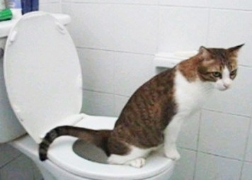 cat perched on toilet seat