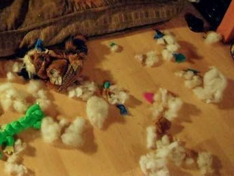 eviscerated dog toys