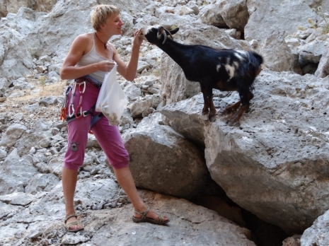 rock climber feeding goat