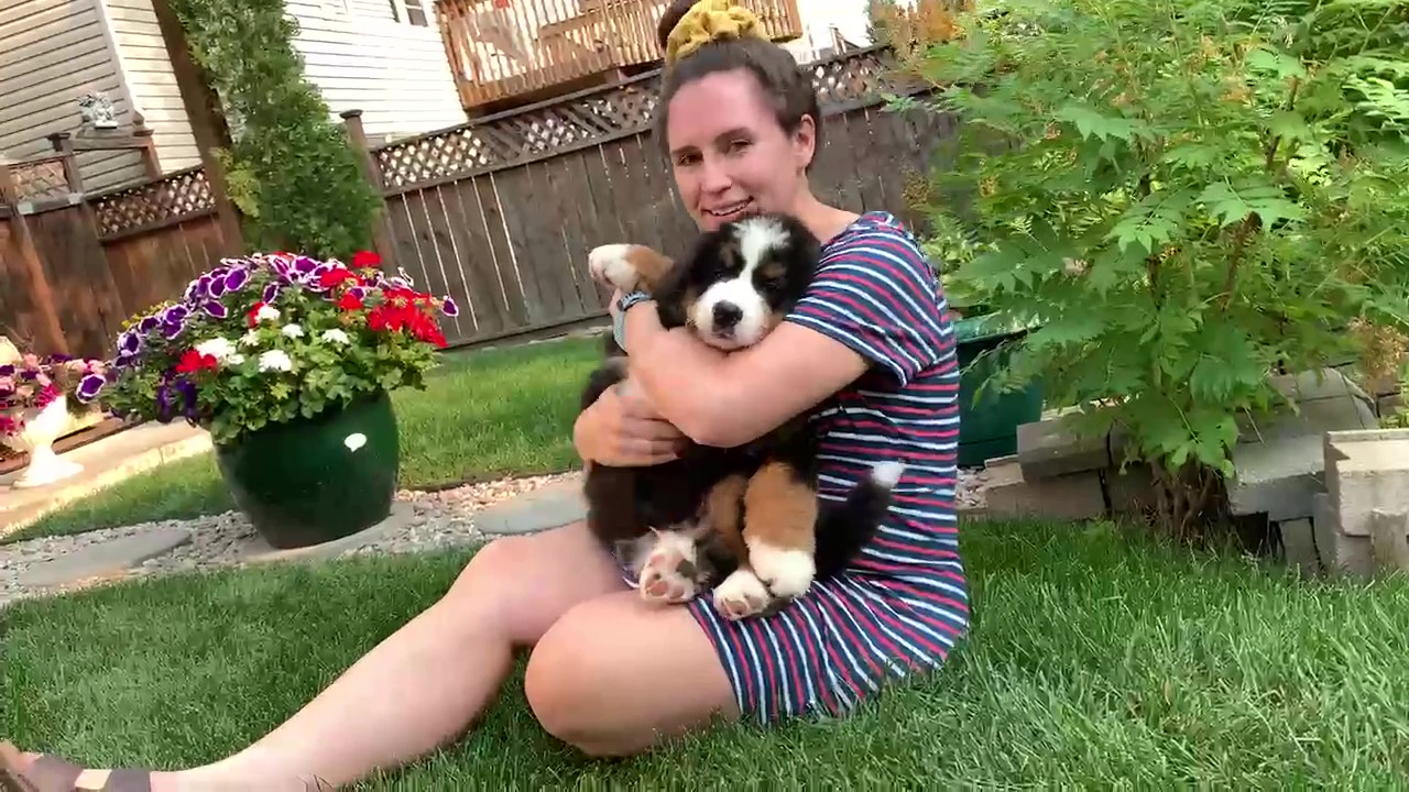 young woman with blissful expression cuddling Bernese Mountain dog