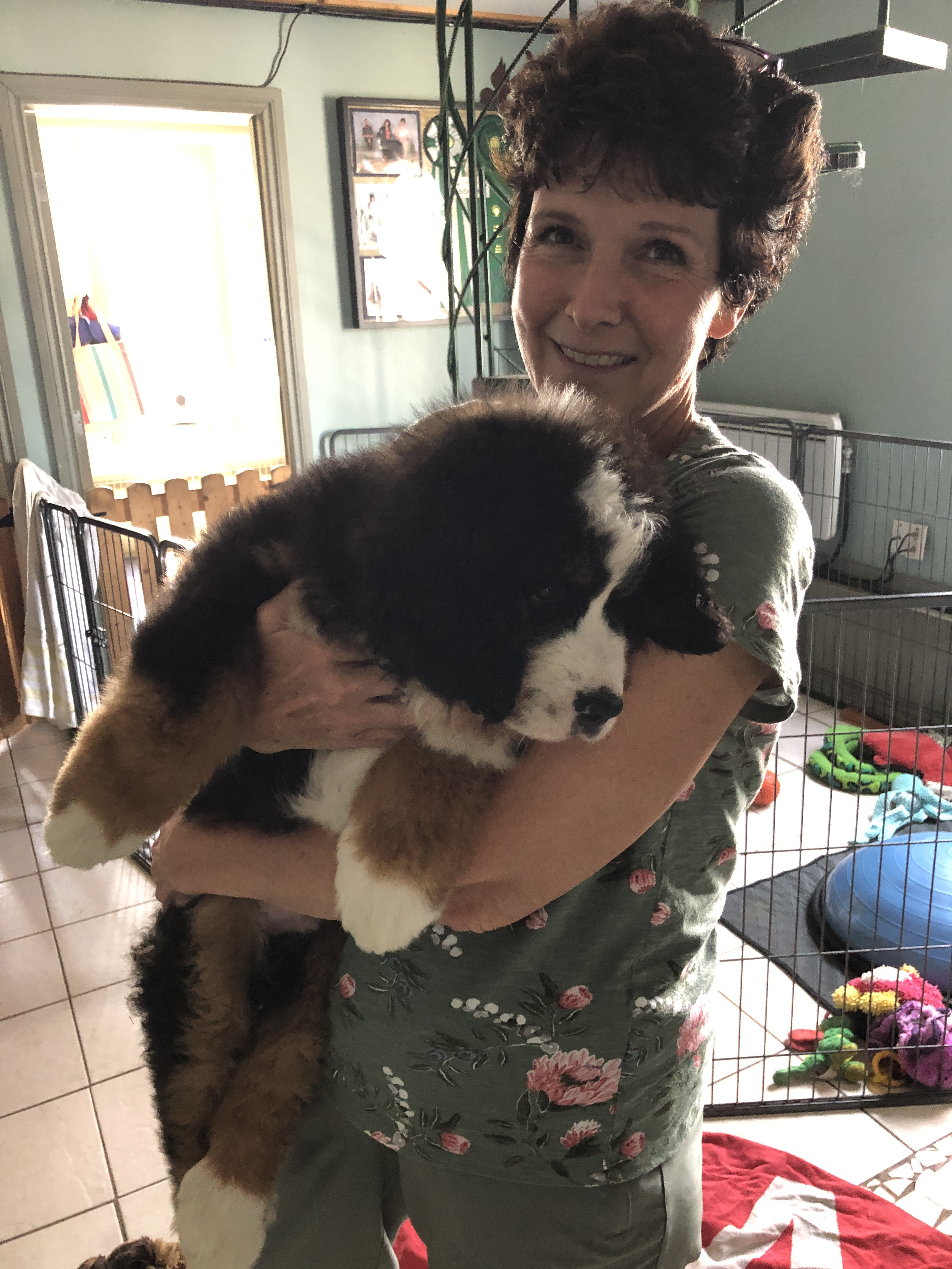 smiling woman holding Bernese Mountain Dog puppy
